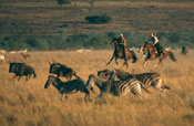 Galloping with Game, South Africa